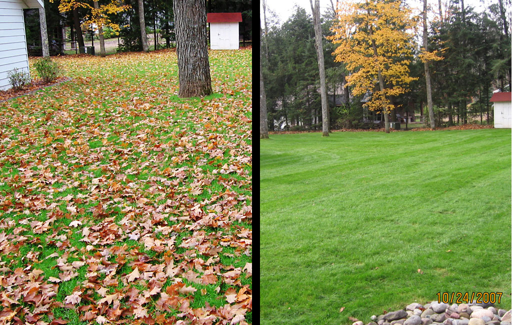 Fall Cleanup Before and After