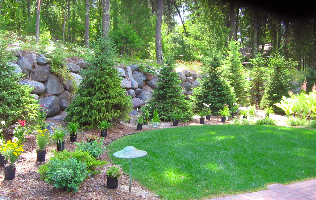 Trees shrubs custom landscaping for Custom landscape design